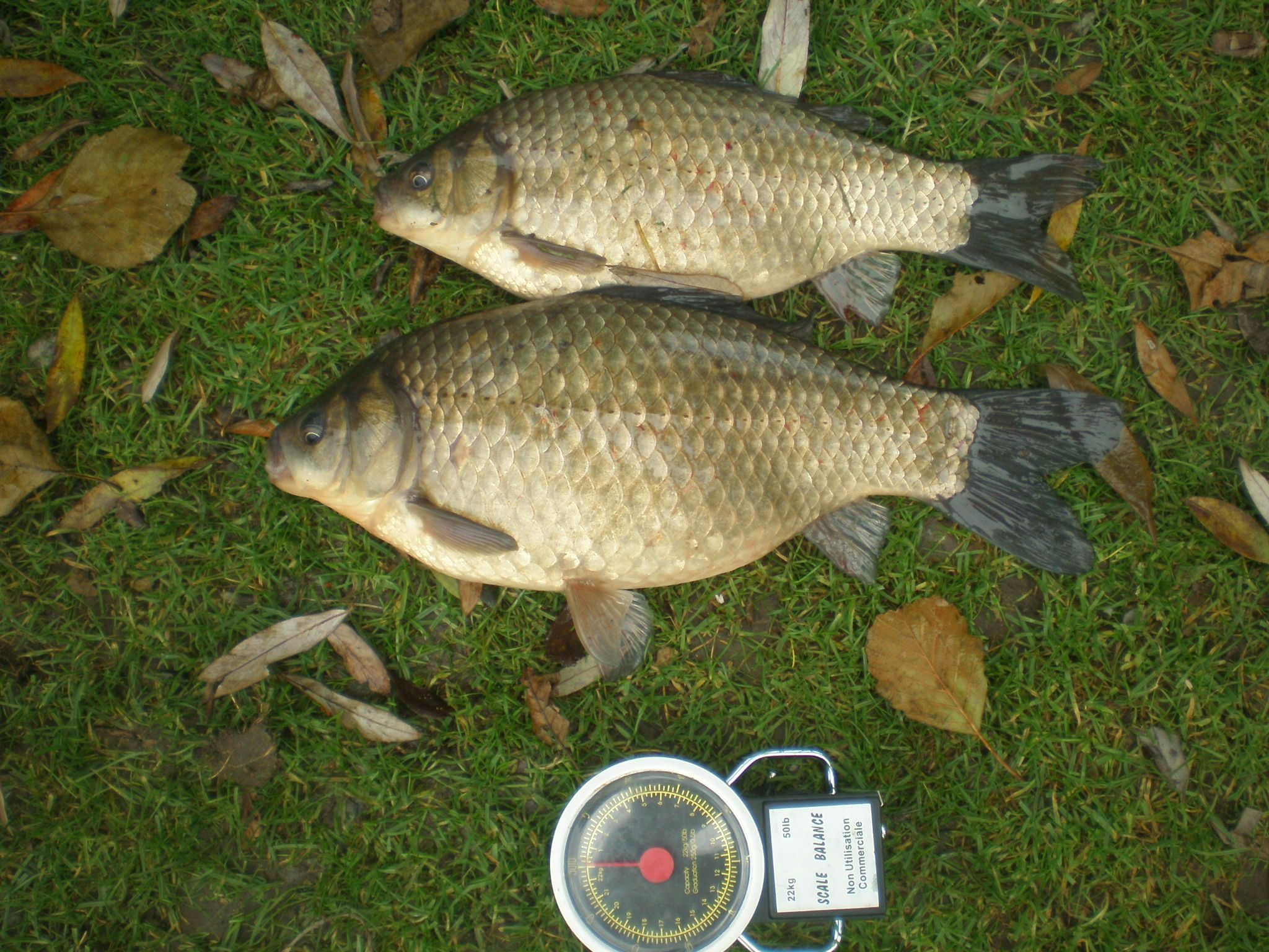 Svingery comme se servir pour la pêche